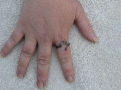seahorse ring