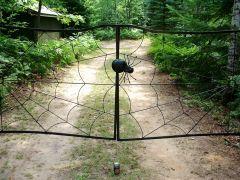 Spider Web Gate Spider Closeup