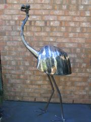 Emu Australian Wildlife.