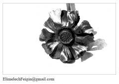 Iron_flower_Chrysanthemum