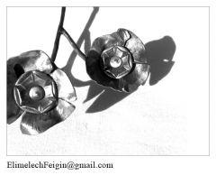 Iron_flower_Flowers