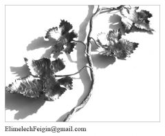 Iron_flower_Grapevine2