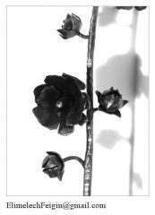 Iron_flower_Hollyhock-detail