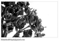 Iron_flower_Italian_Valeriana1-detail