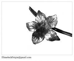 Iron_flower_Watermelon_flower-detail