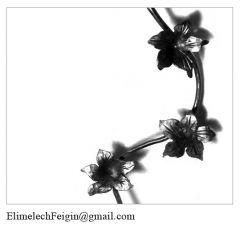 Iron_flower_Watermelon_flower