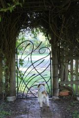 Grasslands gate with puppy