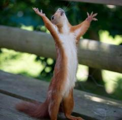 Praise-the-Lord!!.jpg