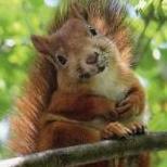 Squirrelonastick