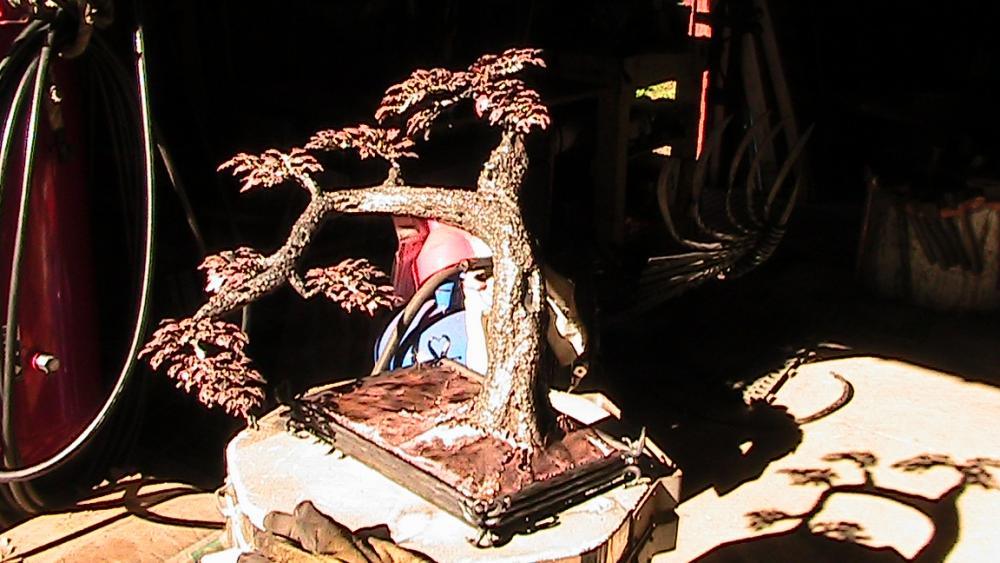 fin bonsai 002.JPG