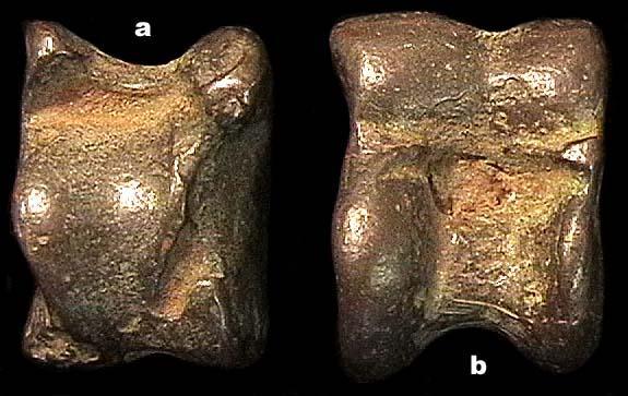 chin-bronzebone-2.jpg