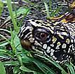 turtle 02a.jpg