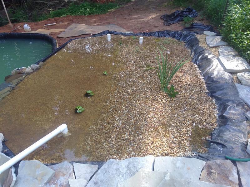 new pond8 (Copy).jpg